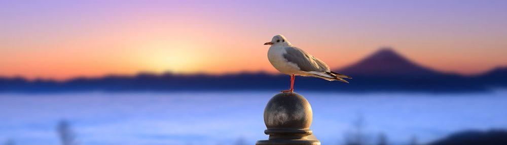早起き鳥見聞録